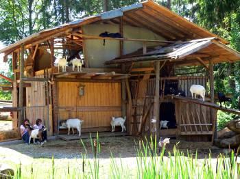 Selbstversorgerhütten in Bayern - Bild ID: gruber-bayerischer-wald-ferienwohnung-tiere-ziegen-ferienhaus-hütte