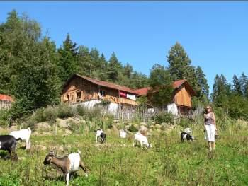 Hüttenurlaub Bayerischer Wald