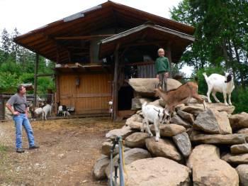 Bayerischer Wald Vermieter von Berghütten - Bild ID:gruber-ferienhütten-bayern-almhütte-ziegen-familienurlaub