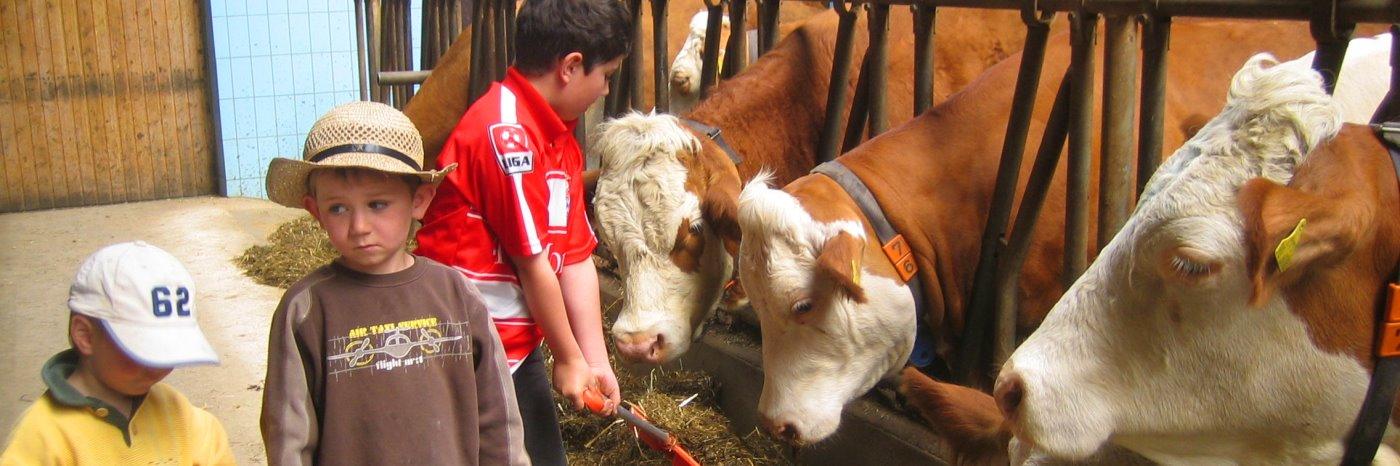 Ferien in Bayern am Kinder Bauernhof im Familien Ferienhaus