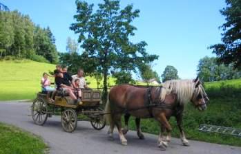 Pferde Kutschenfahrt auf dem Bauernhof
