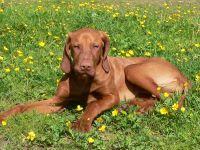 haustierfreundliche Ferienwohnung Urlaub mit Haustier in Bayern