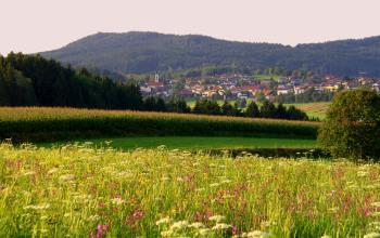 hirschhof-ferienhaus-kirchdorf-im-wald-bauernhof-urlaub