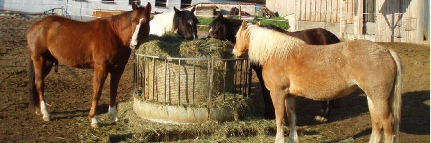 Reiturlaub und Bauernhofurlaub in Niederbayern Holmerhof in Wiesenfelden