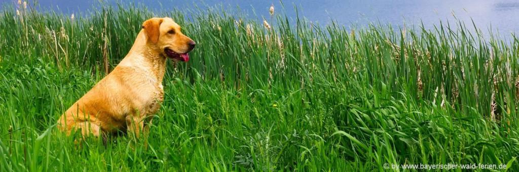 Ferienhäuser mit Hund in Bayern Ferienhaus eingezäunt