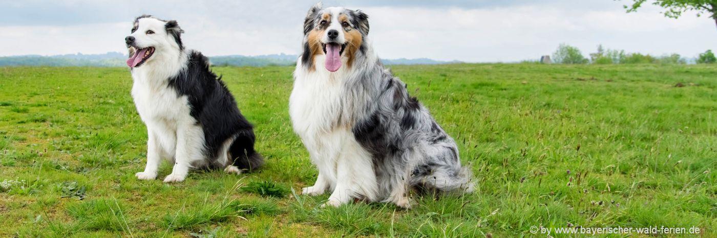 Urlaub mit Hund in Pensionen im Bayerischen Wald