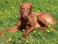 hunde-willkommen-urlaub-mit-haustieren-erlaubt