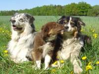 Ferien mit den Haustieren in Bayern