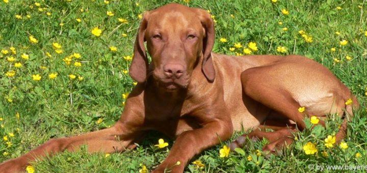 hundefreundliche-unterkunft-bayerischer-wald-urlaub-mit-hund