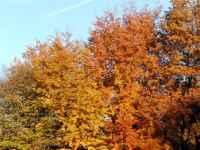 bunte Wälder im Herbsturlaub erleben