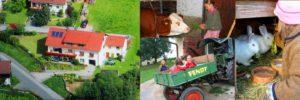 kabauernhof-oberviechtach-krammer-ferienhof-familienurlaub-oberpfalz