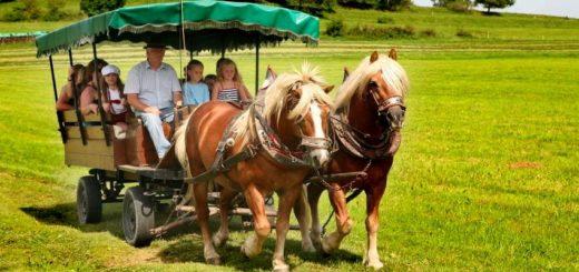 könighof-zwiesel-familienbauernhof-pferdekutschenfahrt