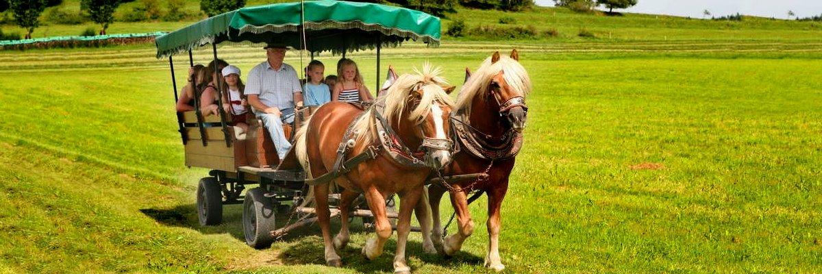 Pferdekutschenfahrt am Bauernhof für Familien in Bayern Familienbauernhof Bayerischer Wald
