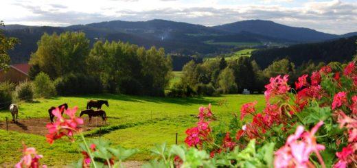 kroner-familienferien-bauernhofurlaub-bayerischer-wald-landschaft