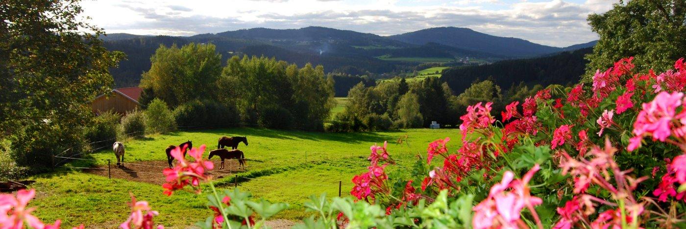 Bayerischer Wald Ferienhof für Kids Farm in Bayern