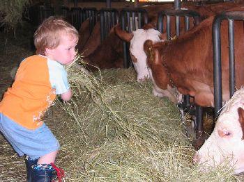 Baby-Bauernhof in Bayern Kuhstall Tiere und Kinder