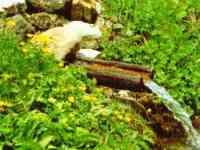 Bayern und Bayerischer Wald Frühling - Wasserquelle