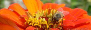 naturbilder-blumen-bienen-frühlingsreisen-bayern