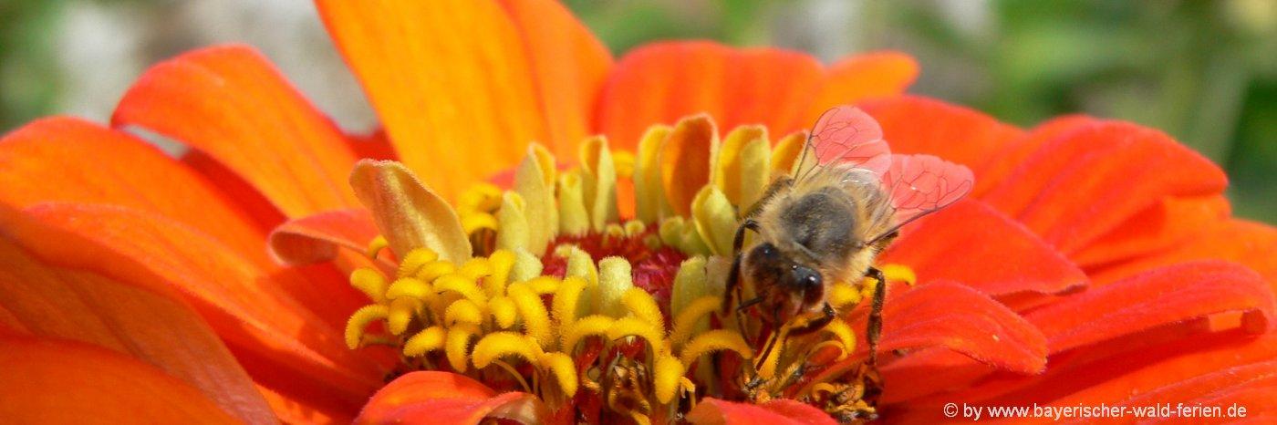 Naturbilder Blumen BIlder und Fotos