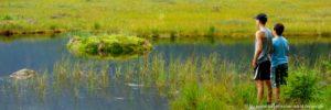 naturschutzgebiete-bayerischer-waldkleiner-arbersee-attraktionen-schwimmende-inseln