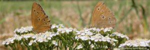 natururlaub-bayerischer-wald-landurlaub-schmetterlinge