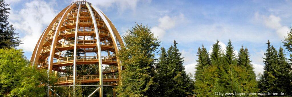 Waldwipfelweg am Nationalpark Urlaub mit Kindern im Hotel Günstig