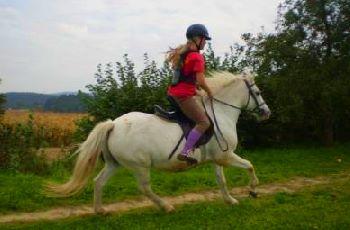 nissl-pferde-ausreiten-bayern-ponyurlaub-deutschland