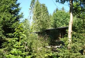 Einfache Almhütte im Wald - Urlaub Waldhaus