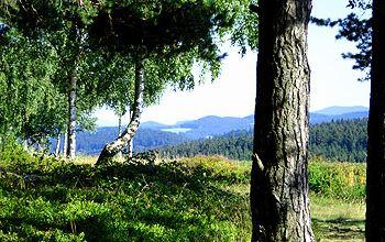 Plattenhöhe Urlaub Almhütte Wald Landschaft in Deutschland