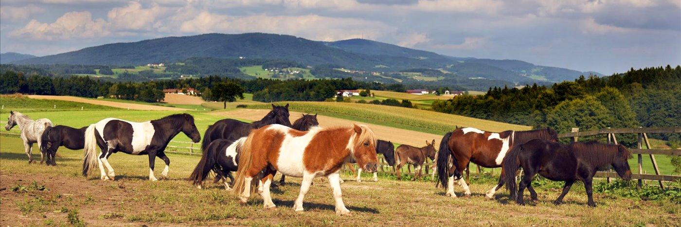 Reiturlaub bei Passau Reiterferien nähe Deggendorf am Ponyhog in Niederbayern