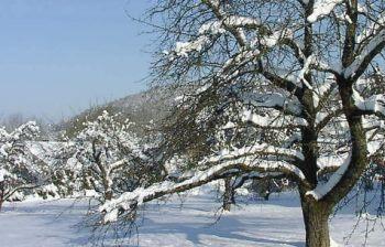 reinerhof-winterwandern-skiurlaub-sankt-englmar-rodeln
