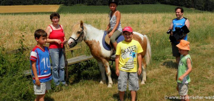 Reiterferien Bayerischer Wald Peiturlaub in Bayern Ponyreiten