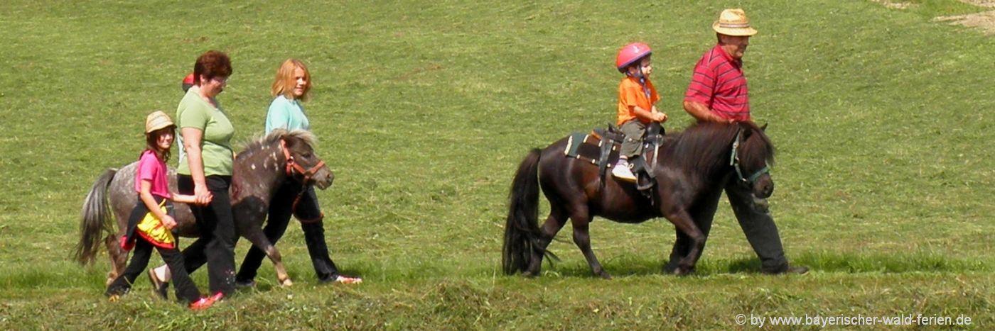 Reiterferien Bayerischer Wald Ponyhof und Reiterhof für Kinder