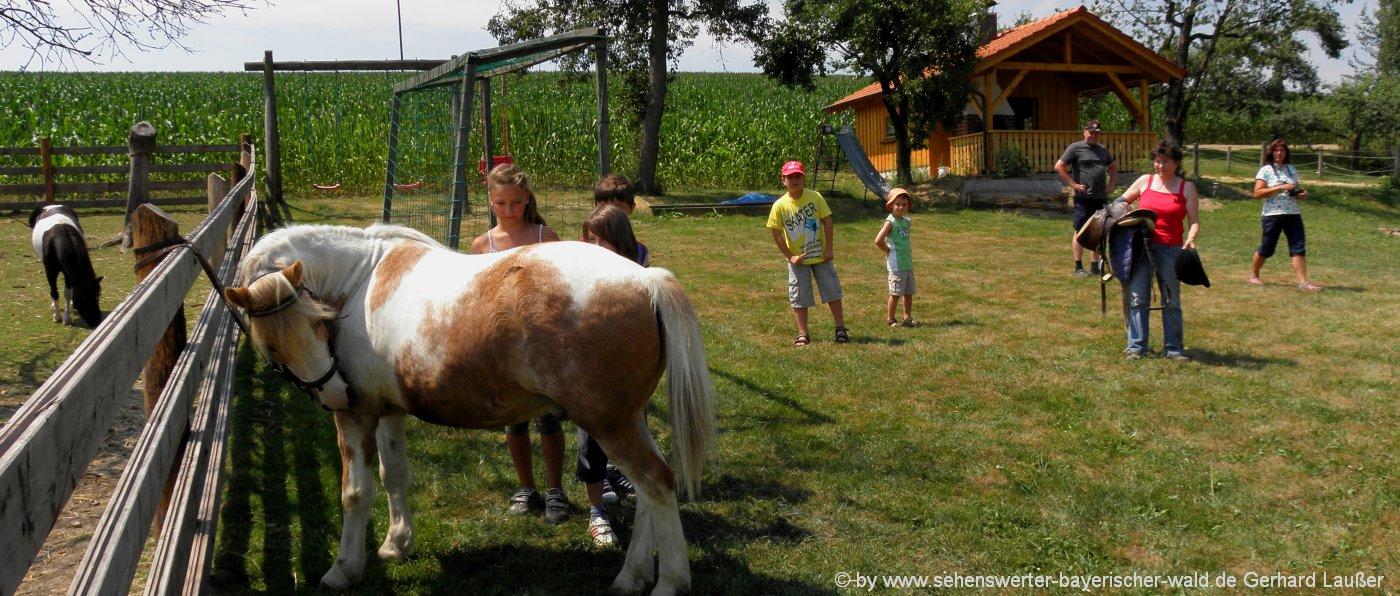 reiturlaub-am-land-unterkunft-zum-reiten-oberpfalz-ponyreiten-niederbayern