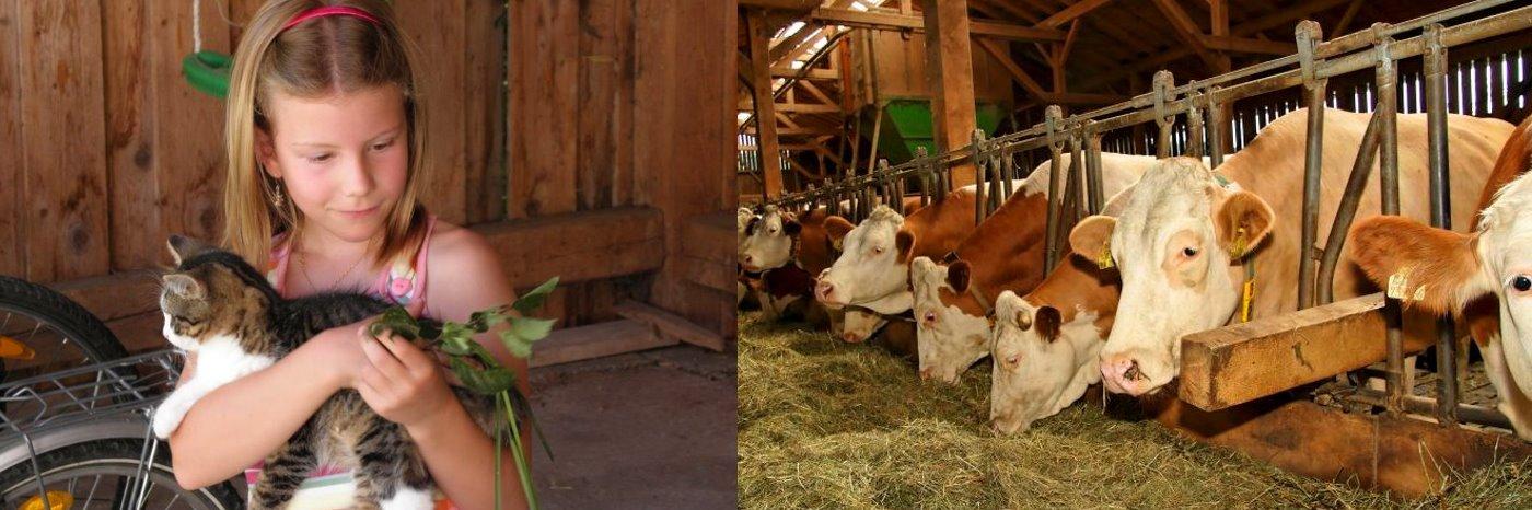 Bauernhofurlaub in Waldkirchen Bauernhofferien in Freyung