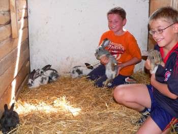 Tiere auf dem Bauernhof Bauernhofurlaub bei Walderbach und Roding