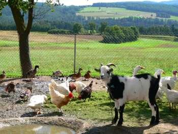 Bauernhofurlaub bei Walderbach und Roding - Ferienhof Familie Schambeck