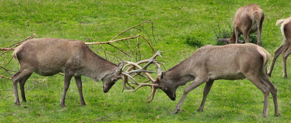 Bauernhofurlaub in Spiegelau am Nationalpark Bayerischer Wald