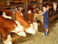 Traumhof Urlaub in Bayren die Kuhstall Erlebniswelt am Bauernhof