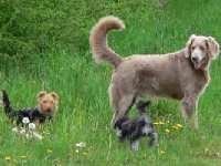 Ferienwohnung Haustiere willkommen Bayerischer Wald