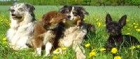 Urlaub mit Hund und Haustier
