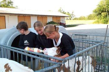 Kälbchen füttern am kinderfreundlichen Bauernhof Familienurlaub