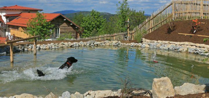 waldeck-koch-familienhotel-bayeisccher-wald-hunde-badeteich