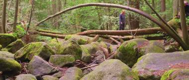 wandergebiet-höllbachtal-urwald-felsen-baum-bayern-panorama-380