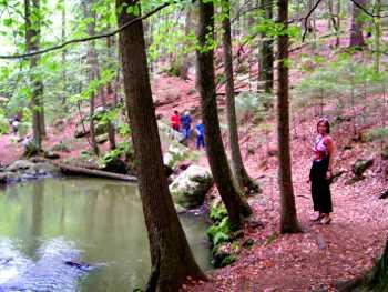 Bayerischer Wald Wandervorschläge Wanderurlaub - Pfahl Viechtach