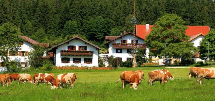 wieshof-wellness-biobauernhof-bayerischer-wald-reiterferien