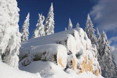 winterurlaub-wanderurlaub-bayerischer-wald-wanderhotel-375