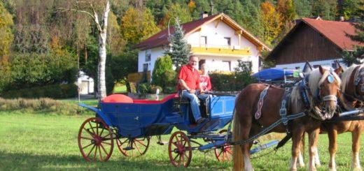 zankl-ferienhof-miltach-pferde-kutsche-bayerischer-wald-urlaub