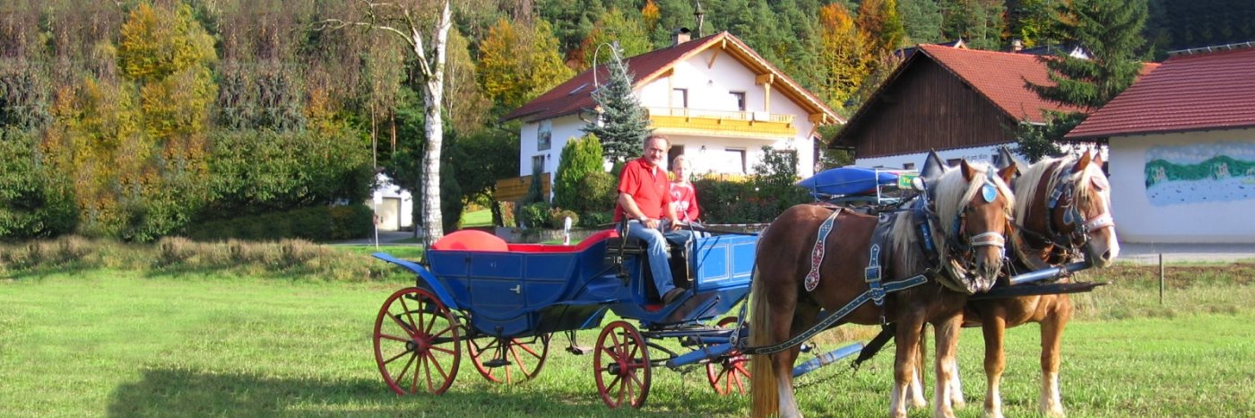 Ferienhof in Bayern Reiterhof Zankl in Miltach im Bayerwald
