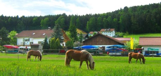 zankl-ferienwohnungen-miltach-ferienhof-reiterhof-bayern